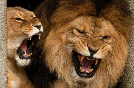 Կենդանակերպի 6 նշան, ովքեր չեն վախենում արտահայտել իրենց կարծիքը