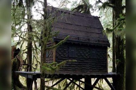 Մանկապիղծը ծառի վրա կառուցած հեքիաթային տնակում պահել է մանկական պոռնոգրաֆիկ նյութեր․ ԼՈՒՍԱՆԿԱՐ