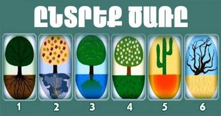 ԹԵՍՏ. Ընտրեք ծառը և իմացեք Ձեր մասին ավելին