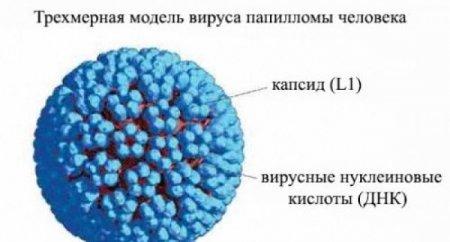 Ինչպե՞ս կարելի է հասկանալ,արդյոք վարակված եք պապիլոմա վիրուսով